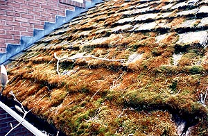 Roofing Shingles Cedar Shakes Roof Maintenance