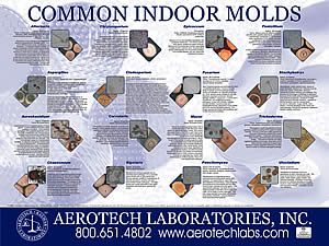 Common Indoor Molds
